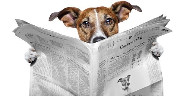 de ingrediënten van een goed persbericht